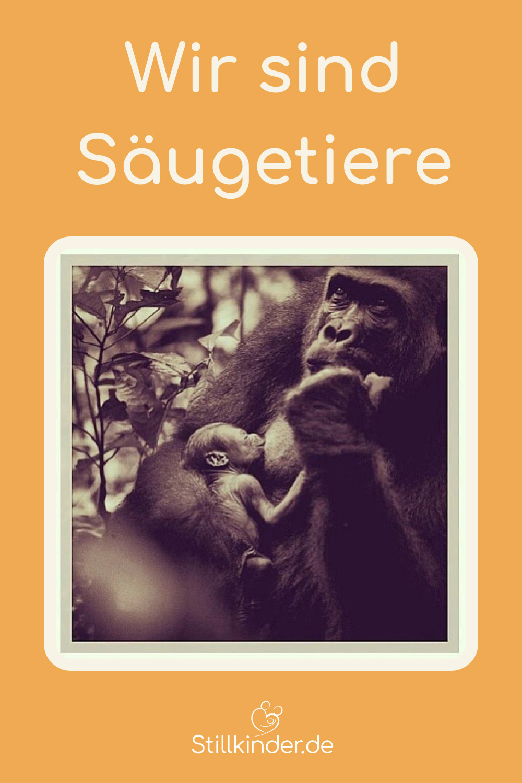 Gorilla mit Neugeborenem