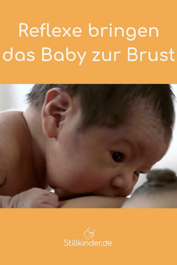 Ein Neugeborenes findet die Brust mit seinen Suchreflexen