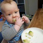 Muttermilch oder feste Kost? Eine Abwägung der Fragen