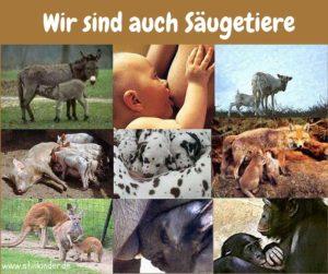 Wir sind auch Säugetiere